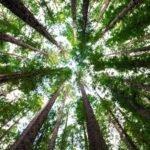 Milieucommissie EP presenteert wetsvoorstel EU klimaatwet