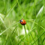 Nieuw EU-fonds voor biodiversiteit